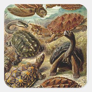 Haeckel Brown Sea Turtle Tortoise Painting Sticker