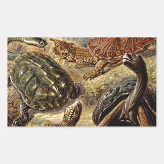 Haeckel Brown Sea Turtle Tortoise Painting Rectangle Stickers