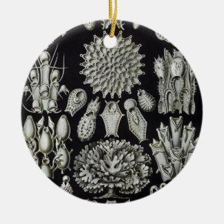 Haeckel Bryozoa Christmas Tree Ornaments