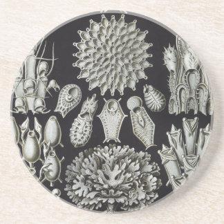 Haeckel Bryozoa Drink Coaster