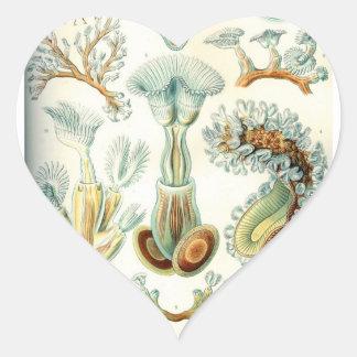 Haeckel Bryozoa Heart Sticker