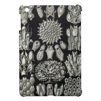 Haeckel Bryozoa Cover For The iPad Mini