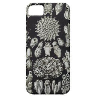 Haeckel Bryozoa iPhone SE/5/5s Case