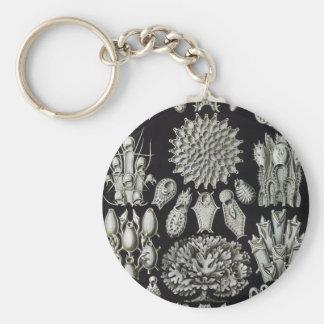Haeckel Bryozoa Keychain