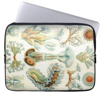 Haeckel Bryozoa Laptop Sleeve