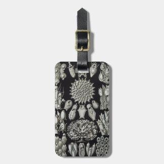Haeckel Bryozoa Luggage Tag