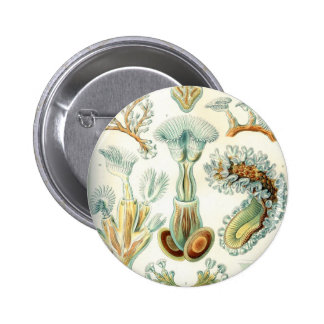 Haeckel Bryozoa Pinback Button