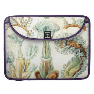 Haeckel Bryozoa Sleeve For MacBook Pro