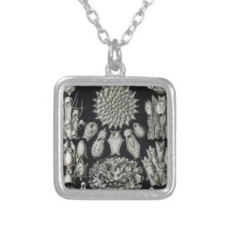 Haeckel Bryozoa Square Pendant Necklace
