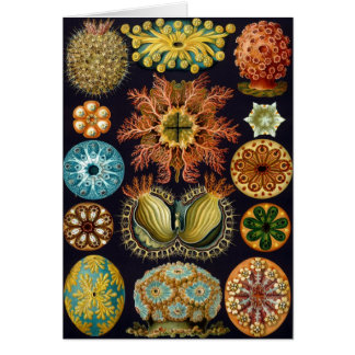 Haeckel Card