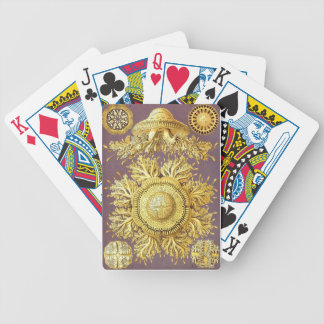 Haeckel cards bicycle playing cards