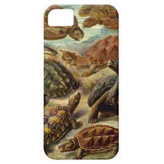 Haeckel Chelonia iPhone 5 Covers
