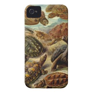 Haeckel Chelonia Case-Mate iPhone 4 Cases