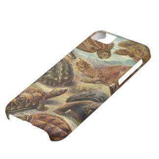 Haeckel Chelonia Turtles iPhone 5 Case Mate Case