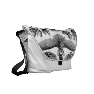 Haeckel Chiroptera Courier Bag