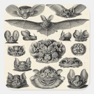 Haeckel Chiroptera Square Sticker