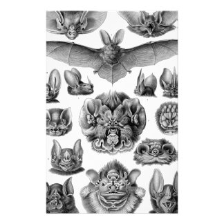 Haeckel Chiroptera Stationery