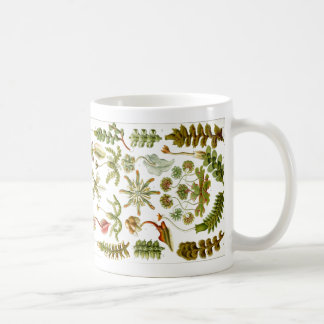Haeckel Coffee Mug