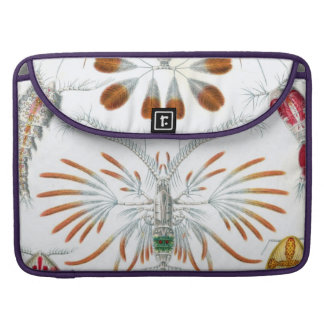 Haeckel Copepoda MacBook Pro Sleeve