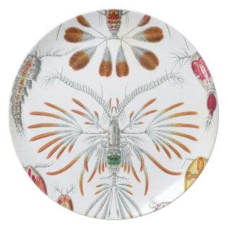 Haeckel Copepoda Dinner Plate