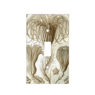 Haeckel Crinoidea Light Switch Plate