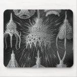Haeckel Cyrtoidea Alfombrillas De Ratones