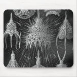 Haeckel Cyrtoidea Mouse Pad