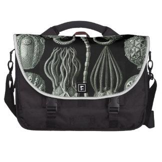 Haeckel Cystoidea Laptop Bags
