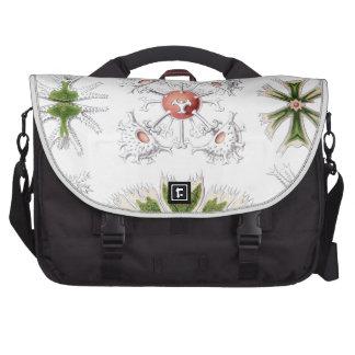 Haeckel Desmidiea Commuter Bag