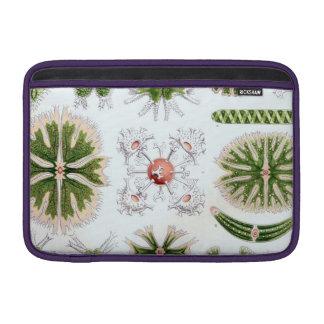 Haeckel Desmidiea MacBook Sleeve
