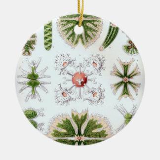 Haeckel Desmidiea Ornaments