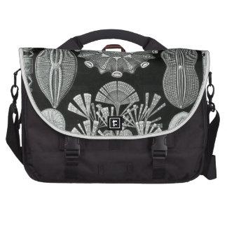 Haeckel Diatomea Bag For Laptop