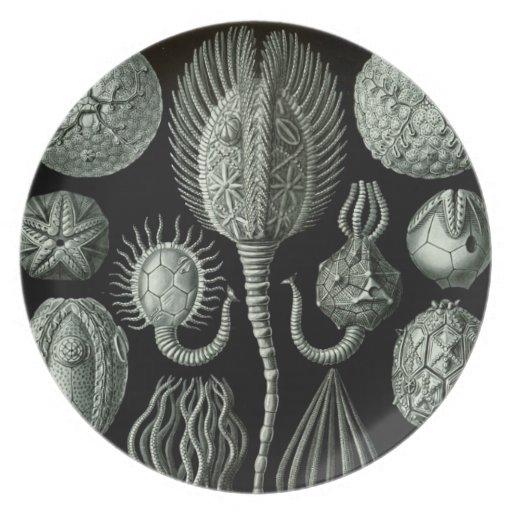 Haeckel Dinner Plate