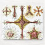 Haeckel Discoidea