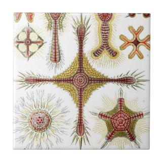 Haeckel Discoidea Azulejo Cuadrado Pequeño