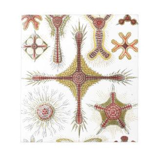 Haeckel Discoidea Bloc De Notas