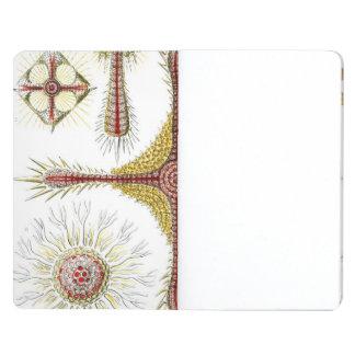 Haeckel Discoidea Cuaderno