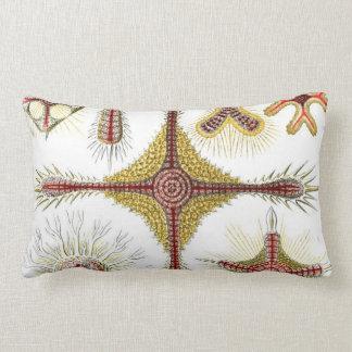 Haeckel Discoidea Lumbar Pillow