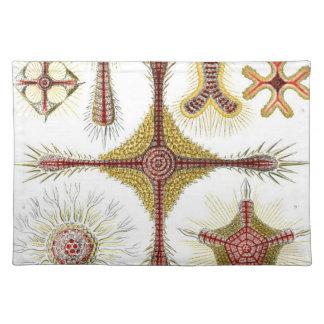Haeckel Discoidea Mantel