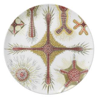 Haeckel Discoidea Platos