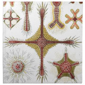 Haeckel Discoidea Servilletas De Papel