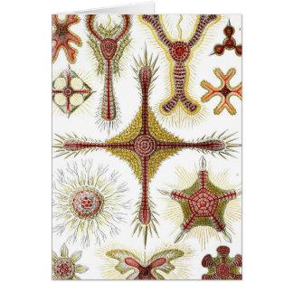 Haeckel Discoidea Tarjeta De Felicitación