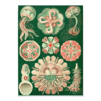 Haeckel Discomedusae Card