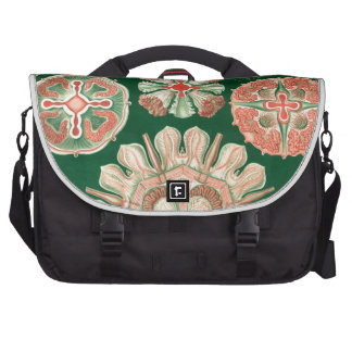 Haeckel Discomedusae Computer Bag
