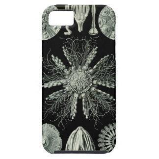 Haeckel Echinidea Funda Para iPhone SE/5/5s