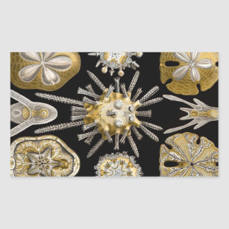 Haeckel Echinidea Rectangular Sticker