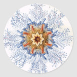 Haeckel Etiqueta Redonda