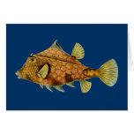 Haeckel Fish Card