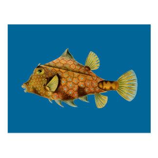 Haeckel Fish Postcard
