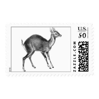 Haeckel Four Horned Deer Postage